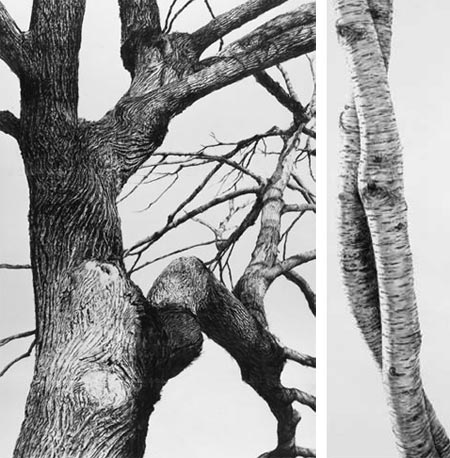 Trees in Detail