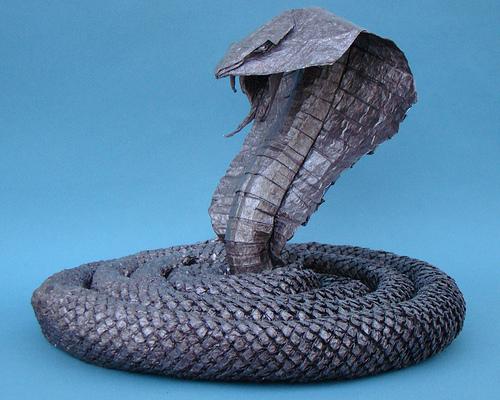 folded cobra